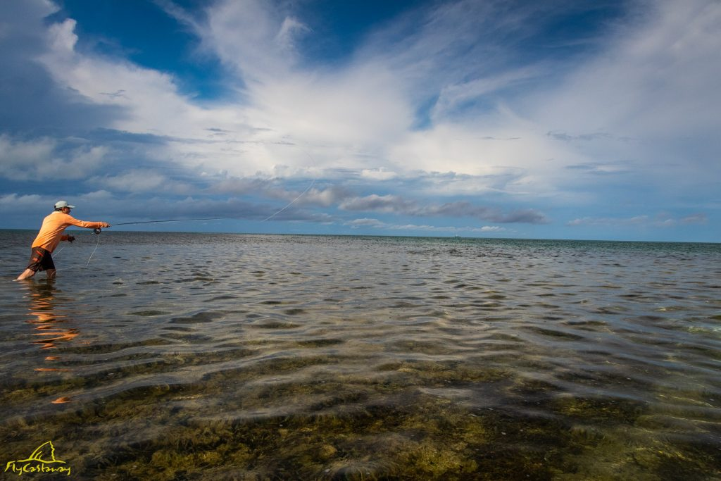 Fly Fishing for Bumphead Parrotfish